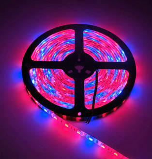 Red/Blue 3:1 ratio 12 volt 5050 LED grow ribbon - waterproof